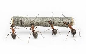 mravljicedelavke